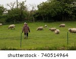 Women shepherd herds sheep in English countryside, Cambridgeshire, England