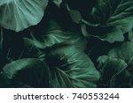 green leaves. low key modern... | Shutterstock . vector #740553244
