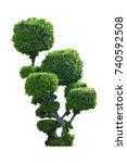 green tree of siamese rough... | Shutterstock . vector #740592508