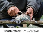 fisherman cleaning fish | Shutterstock . vector #740640460
