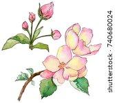wildflower flowers of apple... | Shutterstock . vector #740680024