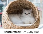 Stock photo a chinchilla persian cat relaxing in a cat bed 740689450