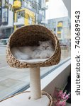 Stock photo a chinchilla persian cat asleep in a cat bed 740689543