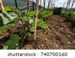 Vegetables Growing In A...