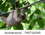 young brown throated sloth ... | Shutterstock . vector #740716540