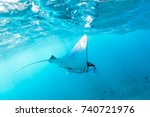 underwater view of hovering... | Shutterstock . vector #740721976