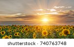 beautiful sunflowers in the... | Shutterstock . vector #740763748