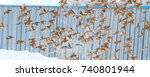 sparrows in the winter flying... | Shutterstock . vector #740801944