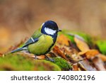 forest bird among the colors of ... | Shutterstock . vector #740802196