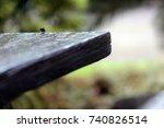 suicide fly | Shutterstock . vector #740826514
