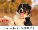 australian shepherd attentive | Shutterstock . vector #740843314