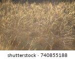steppe dry desiring grass... | Shutterstock . vector #740855188