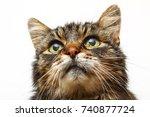 studio shot domestic tabby cat... | Shutterstock . vector #740877724