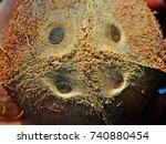 close up of dehusked coconut... | Shutterstock . vector #740880454