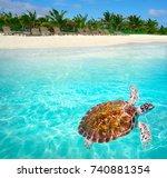 mahahual caribbean beach turtle ... | Shutterstock . vector #740881354