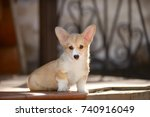 Stock photo welsh corgi pembroke puppy 740916049