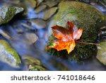 Alone Autumn Leaf On Stone Near ...