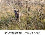 hunting dog on autumn field | Shutterstock . vector #741057784