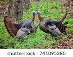 two wild turkeys nose to nose... | Shutterstock . vector #741095380