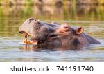 hippo in a river in the caprivi ... | Shutterstock . vector #741191740