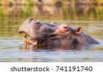 hippo in a river in the caprivi ... | Shutterstock . vector #741191740
