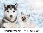 Stock photo cat and dog together on bright light snow background neva masquerade siberian husky looks 741251950