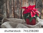 Christmas Poinsettia Isolated...