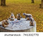 Five Squirrels Eating Nuts On A ...