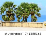 tropical palm trees against the ...   Shutterstock . vector #741355168