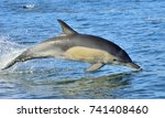 dolphin  swimming in the ocean. ... | Shutterstock . vector #741408460