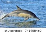 dolphin  swimming in the ocean. ... | Shutterstock . vector #741408460