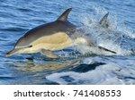 dolphin  swimming in the ocean. ... | Shutterstock . vector #741408553
