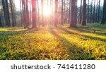 the winter | Shutterstock . vector #741411280
