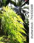 Small photo of The fern leaves and Palm tree grownup together