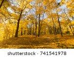 bright fallen leaves in autumn... | Shutterstock . vector #741541978
