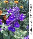 flower | Shutterstock . vector #741578473