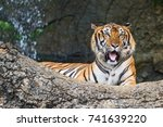 bengal tiger in the forest is... | Shutterstock . vector #741639220