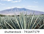 landscape of planting of agave... | Shutterstock . vector #741647179