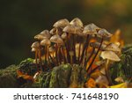 forest mushrooms in the grass....   Shutterstock . vector #741648190