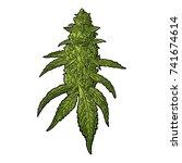 marijuana mature plant with... | Shutterstock .eps vector #741674614