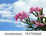 Pink Oleander Flowers  Oleande...