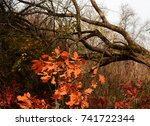 autumn landscape with red ... | Shutterstock . vector #741722344