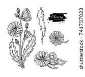 chicory flower  root and seed... | Shutterstock .eps vector #741737023