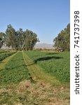 Small photo of Glendale, AZ. U.S.A., Oct. 12, 2017. Mowing of alfalfa field