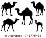 Set Of Camel  Silhouettes  ...