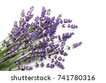 Lavender Flowers Against White...