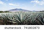 landscape of planting of agave... | Shutterstock . vector #741802873