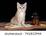 Stock photo cute scottish kitten with a book on a black background 741812944
