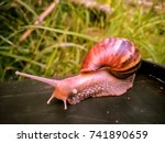 close up picture snail walking... | Shutterstock . vector #741890659