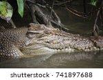 saltwater crocodile. | Shutterstock . vector #741897688